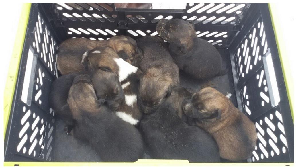 Photo of Strażacy uratowali szczeniaczki