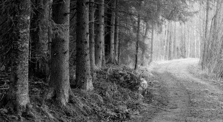 Egzekucja Żydów w piotrkowskim lesie. Strzelali… Polacy