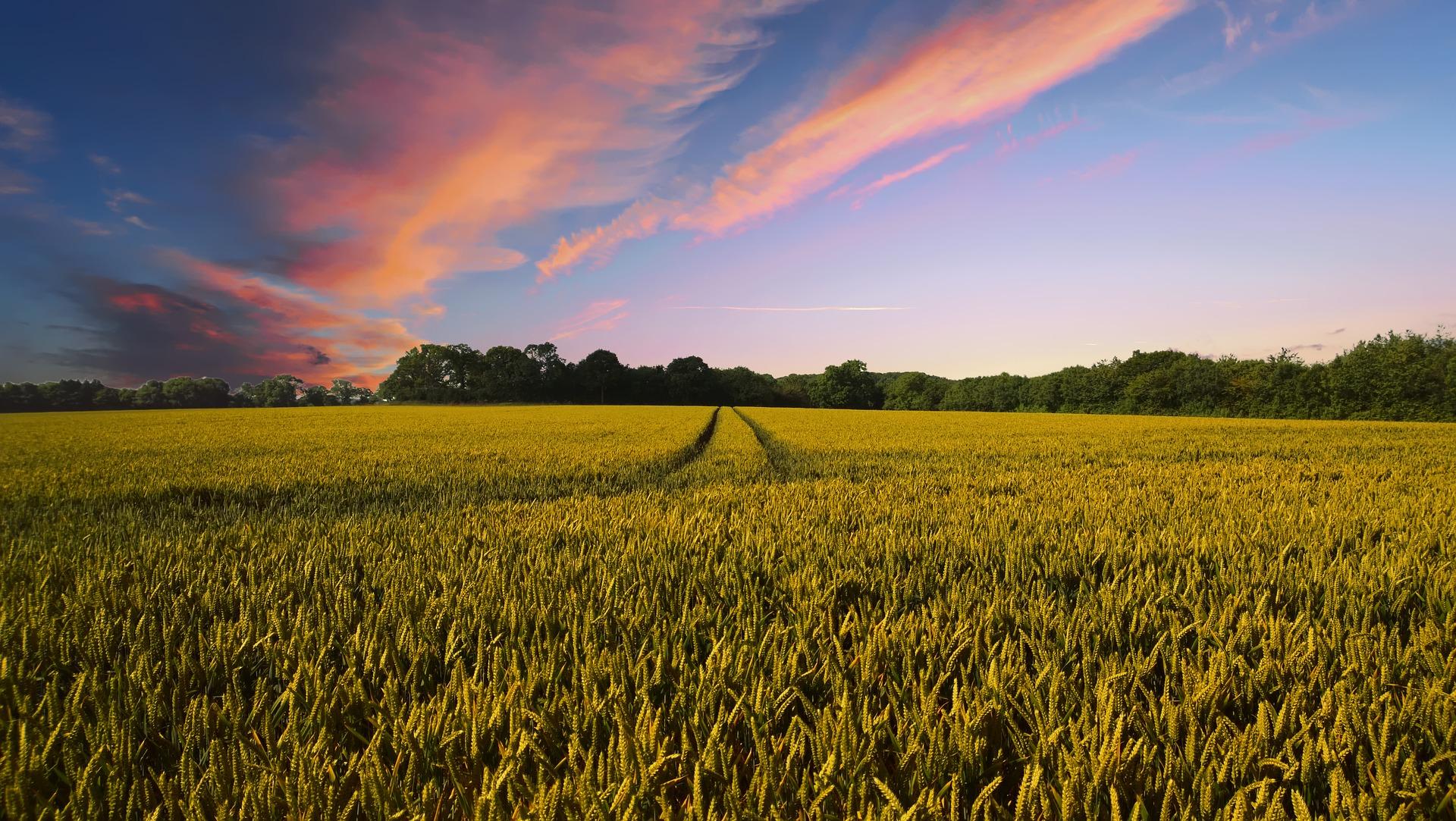 Photo of Ważne szkolenie dla rolników