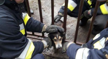 Nietypowa akcja wolborskich strażaków