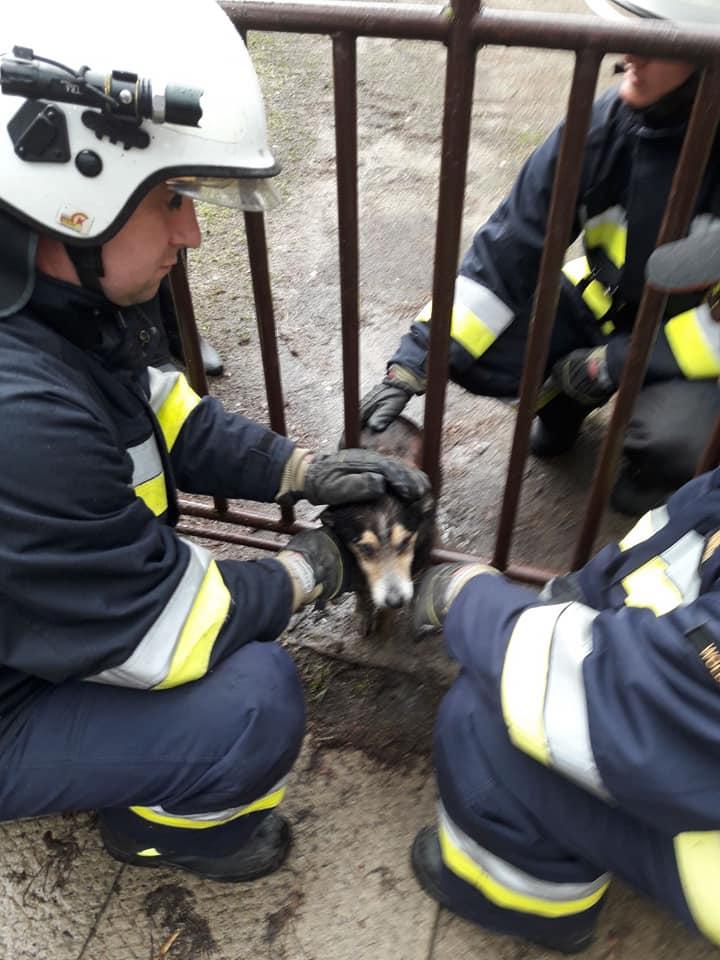Photo of Nietypowa akcja wolborskich strażaków