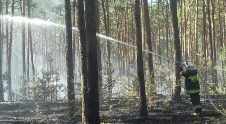 Pożar lasu w Trzech Morgach [AKTUALIZACJA]