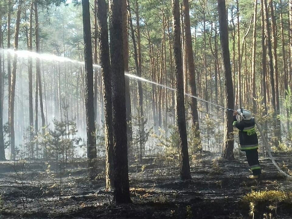 Photo of Pożar lasu w Trzech Morgach [AKTUALIZACJA]