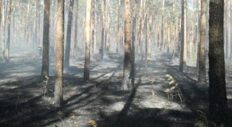 W lasach 2 stopień zagrożenia pożarowego