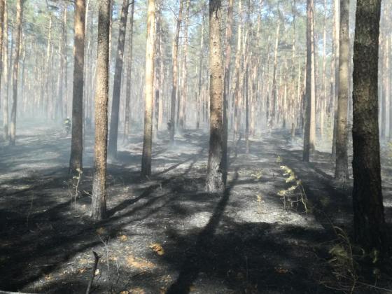 Photo of W lasach 2 stopień zagrożenia pożarowego