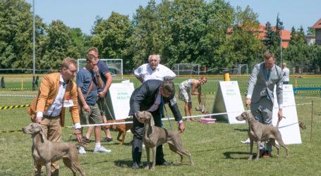 Wystawa psów [ZOBACZ ZDJĘCIA, POSŁUCHAJ RELACJI]