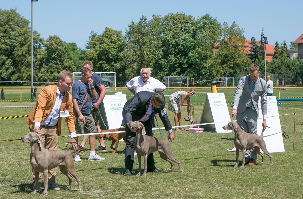 Photo of Wystawa psów [ZOBACZ ZDJĘCIA, POSŁUCHAJ RELACJI]