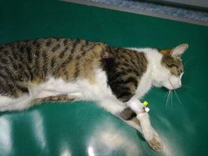 Kolejny kot postrzelony w Sulejowie