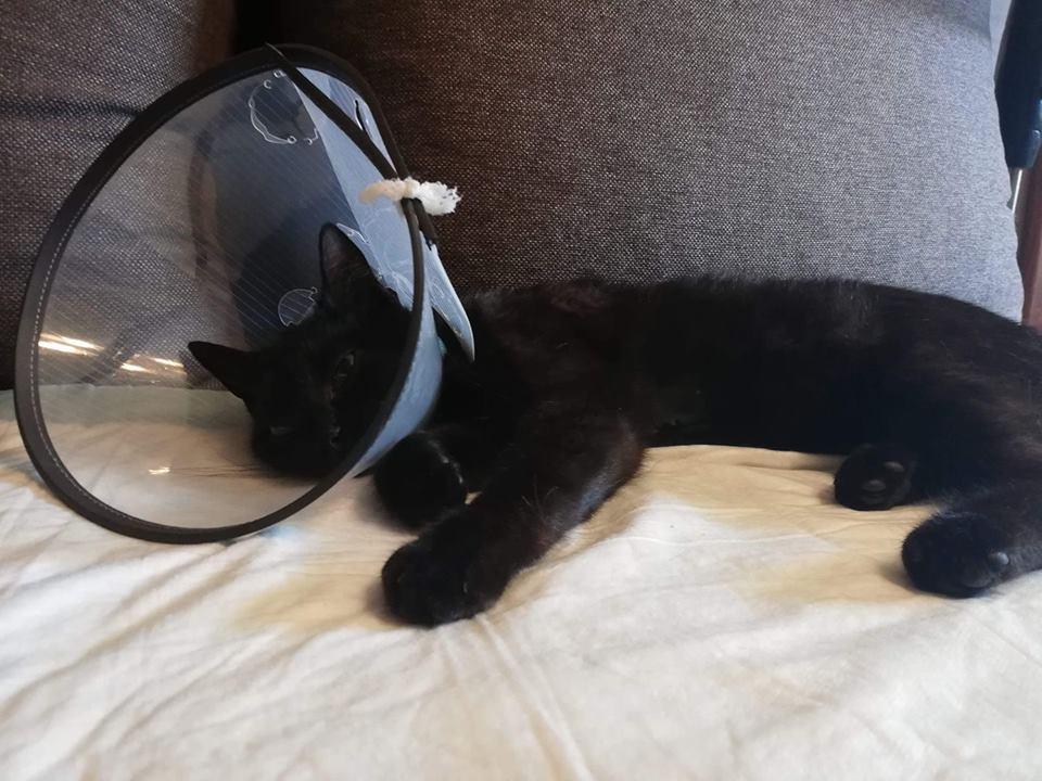 Photo of Kto strzela do kotów w Sulejowie? Sprawcy szuka policja