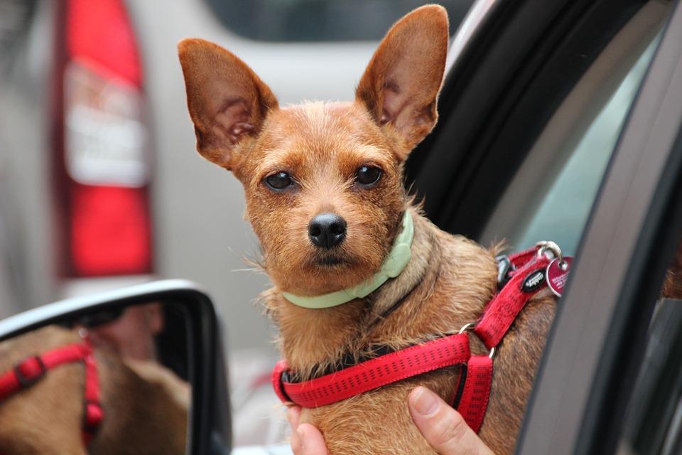 Photo of Pies sprawcą wypadku w Przygłowie?