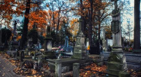 Stary cmentarz w Piotrkowie – FOTOREPORTAŻ