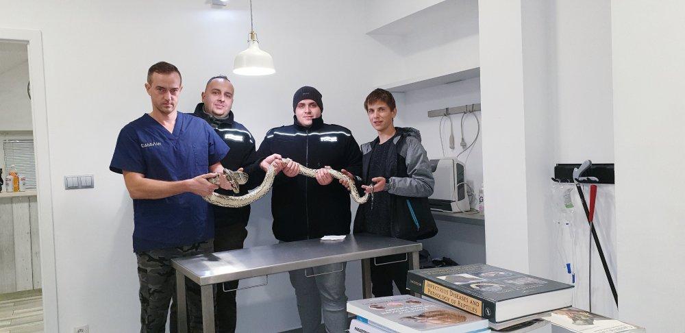 Photo of Nie udało się uratować węża znalezionego w Sulejowie