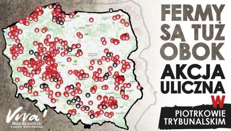 Photo of Fermy są tuż obok! Akcja uliczna fundacji Viva w Piotrkowie