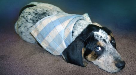Zadbaj o zwierzę w Sylwestra – porady ekspertów