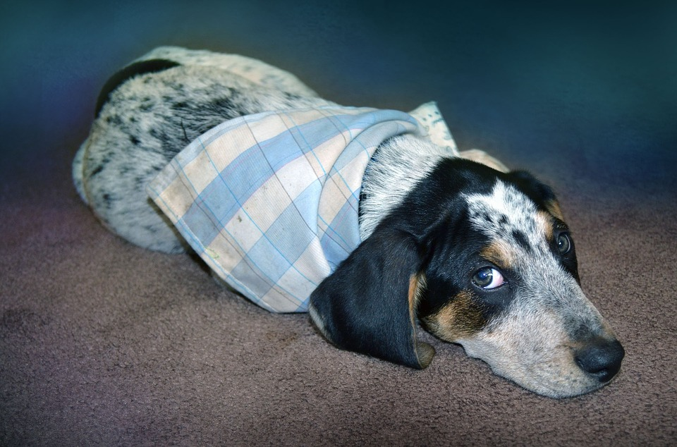 Photo of Zadbaj o zwierzę w Sylwestra – porady ekspertów