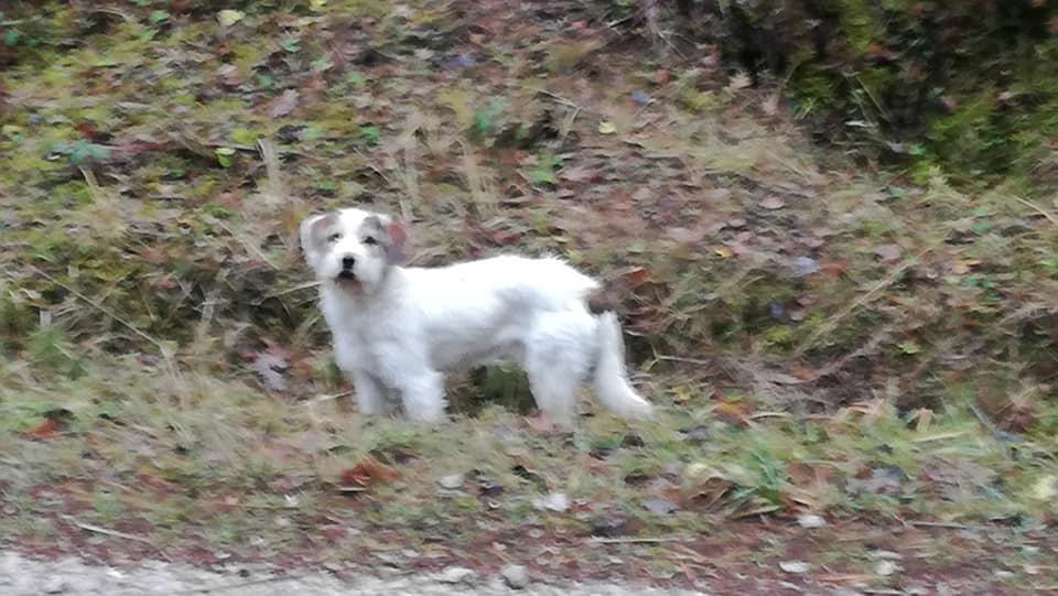 Photo of Czyj to pies?