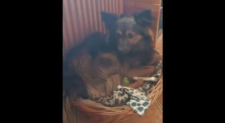 Podczas wypadku zaginął pies. Ktoś widział Dżekiego?