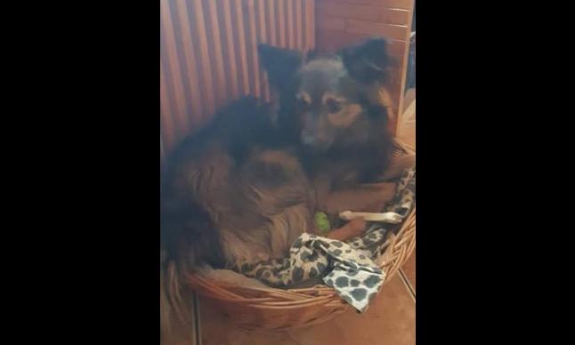 Photo of Podczas wypadku zaginął pies. Ktoś widział Dżekiego?
