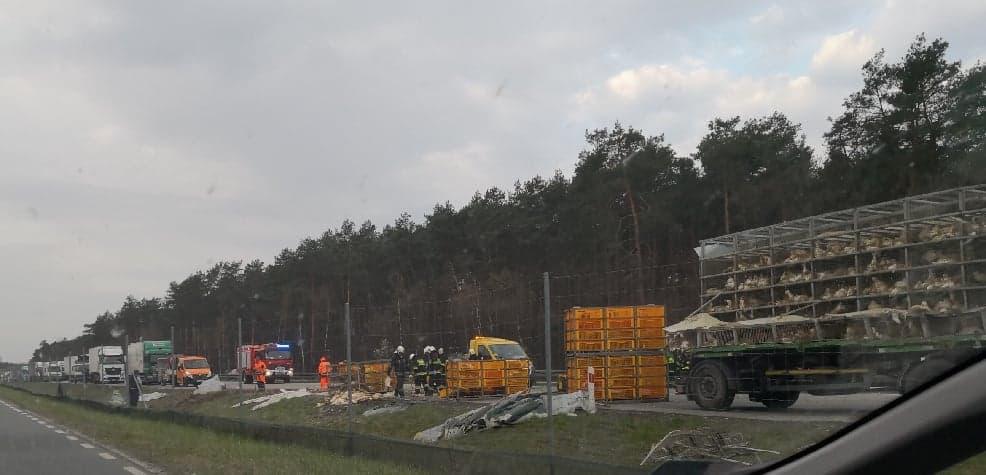 Photo of Na S8 przewróciła się ciężarówka. Na ulicę wybiegły kaczki