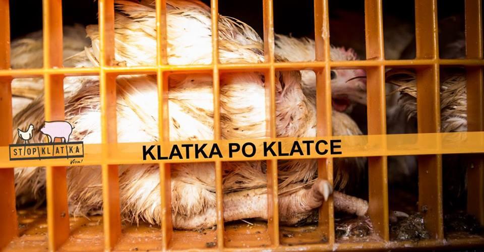Photo of Klatka po klatce w Piotrkowie