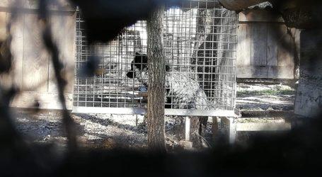 Będzie doniesienie do prokuratury w sprawie fermy zwierząt futerkowych