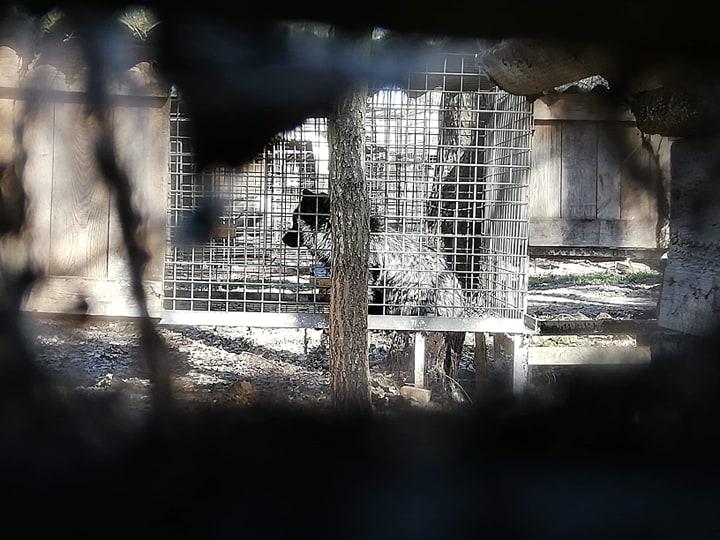 Photo of Będzie doniesienie do prokuratury w sprawie fermy zwierząt futerkowych