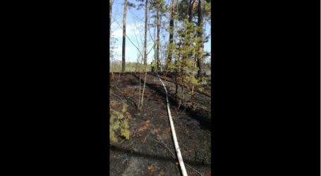 Grupka młodych ludzi  podpaliła las na Wygodzie? – FILM