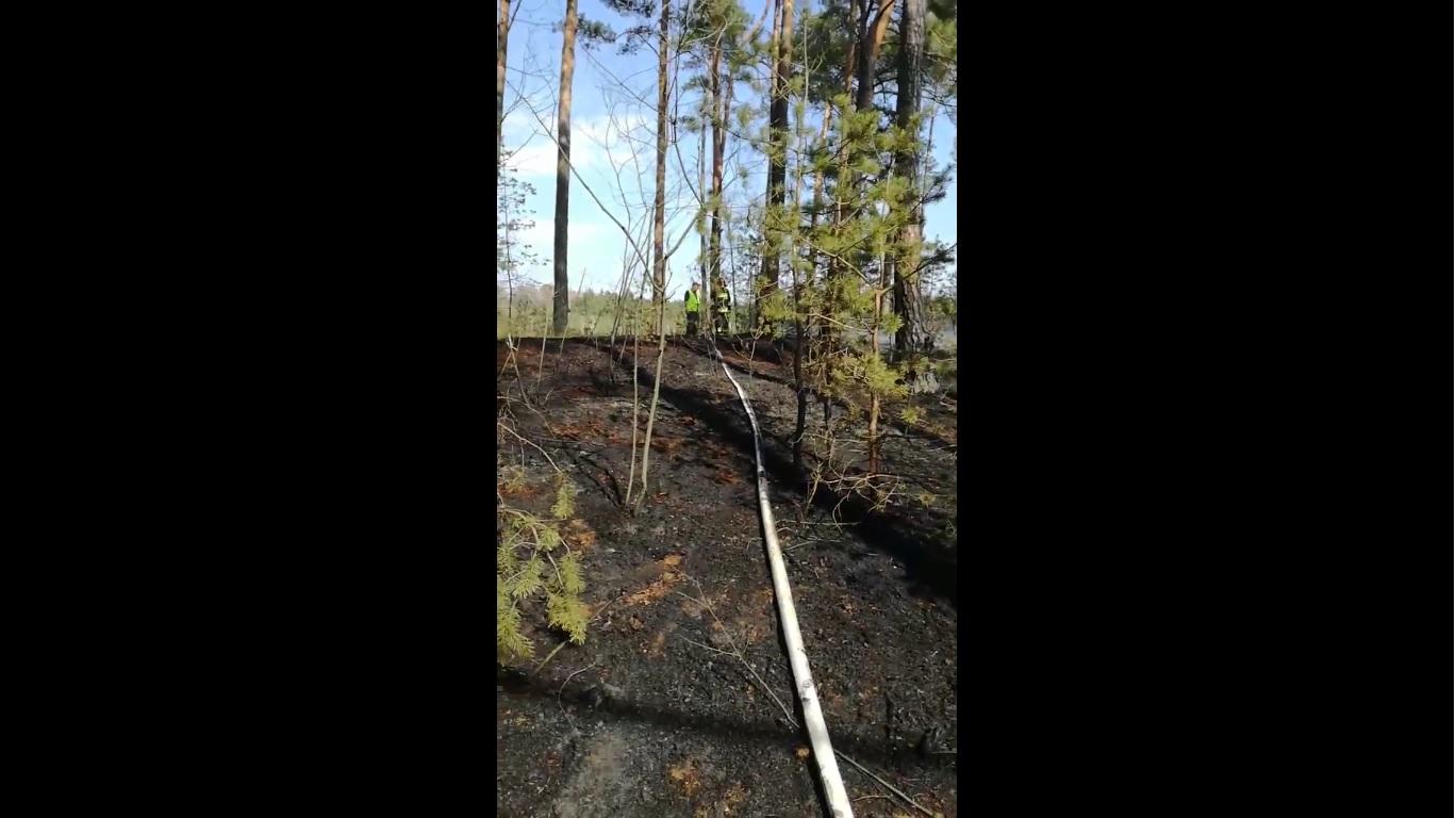 Photo of Grupka młodych ludzi  podpaliła las na Wygodzie? – FILM