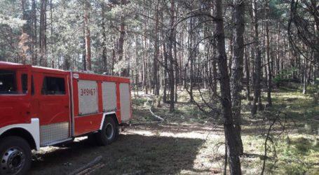 Płonął las w Mierzynie