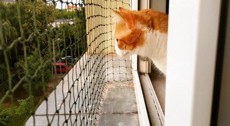 Osiatkuj okno i balkon – zadbaj o swojego kota
