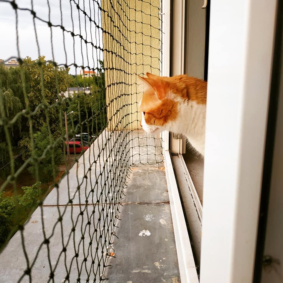 Photo of Osiatkuj okno i balkon – zadbaj o swojego kota
