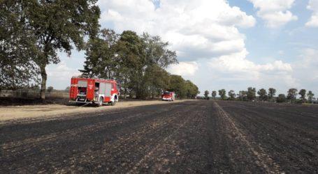 Spłonęło drzewo i 40 hektarów rżyska