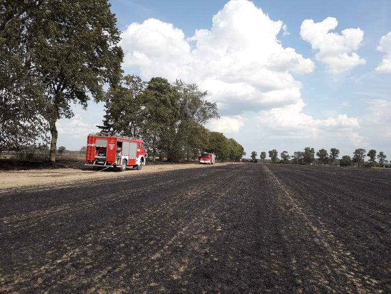 Photo of Spłonęło drzewo i 40 hektarów rżyska