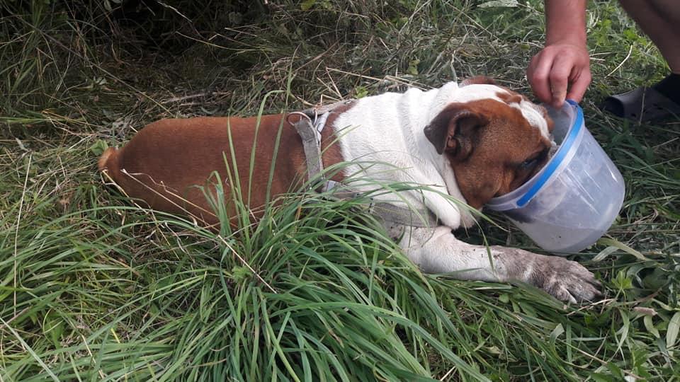 Photo of Uratowali wycieńczonego psa!