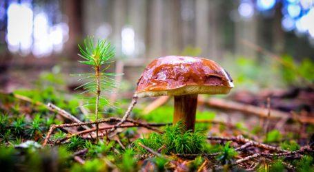 Nadleśnictwo Piotrków informuje: jak nie zgubić się w lesie