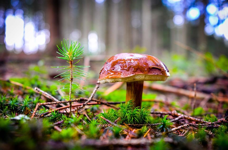 Photo of Nadleśnictwo Piotrków informuje: jak nie zgubić się w lesie
