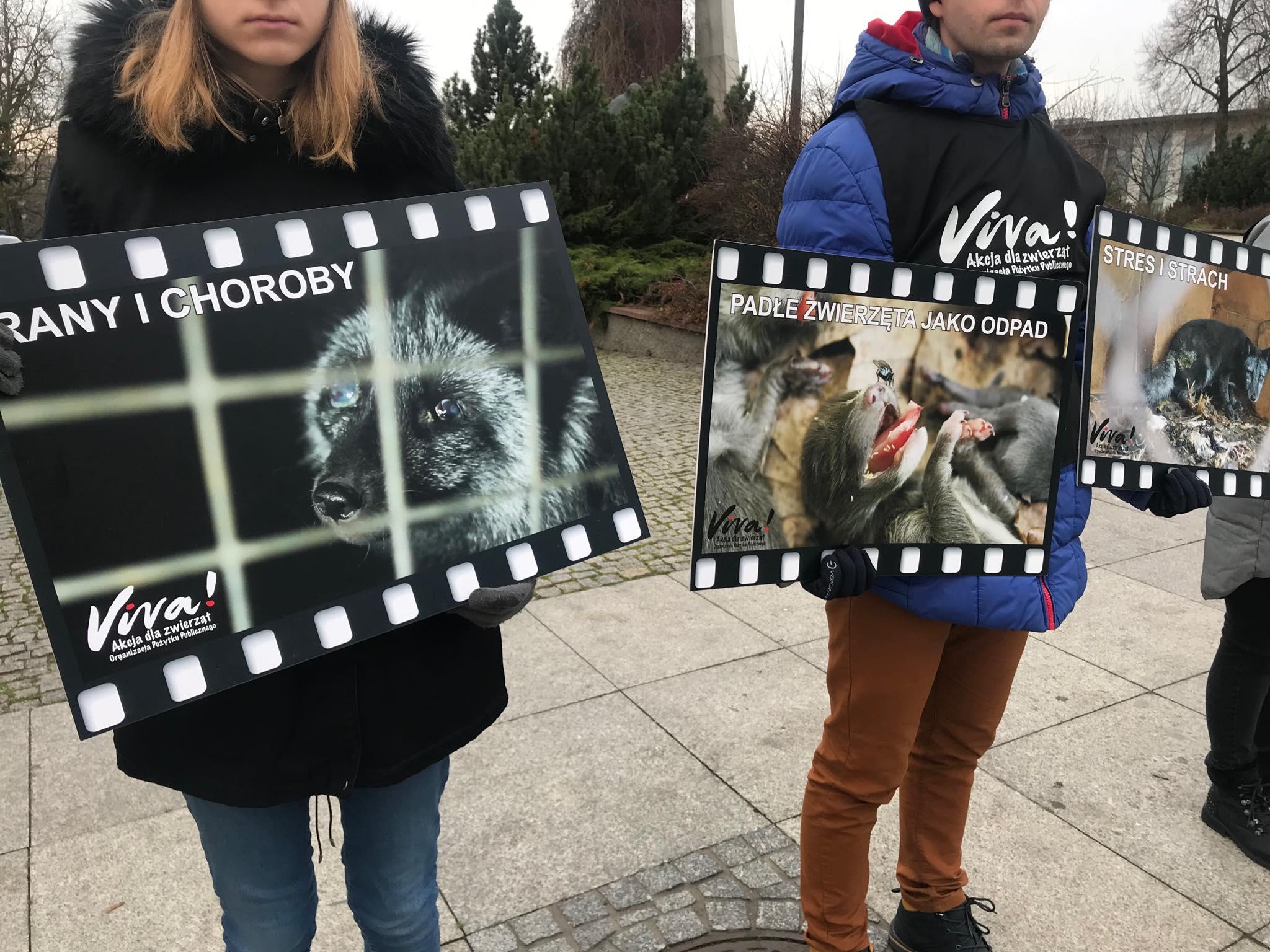 Photo of Fundacja Viva znowu protestuje w obronie zwierząt – ZDJĘCIA,FILM