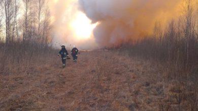 Photo of Strażacy z Piotrkowa walczą z pożarem w Biebrzańskim Parku Narodowym