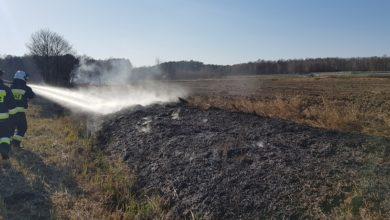 Photo of Strażacy gasili już niemal 50 pożarów suchych traw