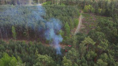 Photo of Podpalacz lasu przyłapany na gorącym uczynku [ZDJĘCIA]