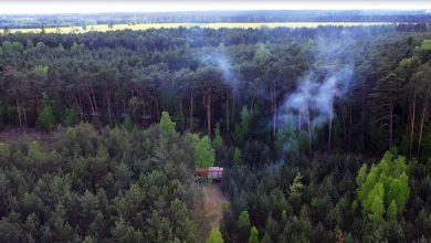 Photo of Do więzienia na 2 lata i 4 miesiące za podpalenie lasu i znieważenie policjanta – FILM
