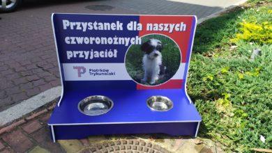 Photo of Poidełka dla psów i kotów