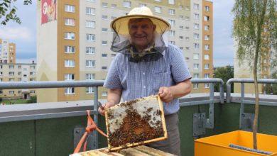 Photo of Ćwierć miliona pszczół na dachu galerii. Za nami drugie miodobranie – FILM,ZDJĘCIA