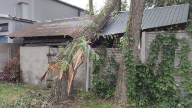 Photo of Powalone i połamane drzewa, uszkodzone dachy – ponad 70 zgłoszeń do straży pożarnej. Skutki popołudniowej wichury – foto, wideo