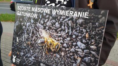 Photo of Uliczna akcja Vivy w obronie klimatu – FOTORELACJA