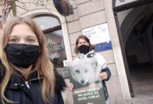 """Photo of Aktywiści przypominają politykom o """"piątce dla zwierząt"""""""