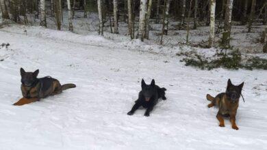 Photo of Kabal, Etar, Jab – psy w piotrkowskiej policji