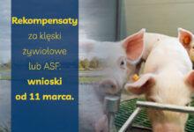 Photo of Rekompensaty za klęski żywiołowe lub ASF: wnioski od 11 marca