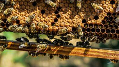 Photo of Jest wsparcie dla pszczelarzy