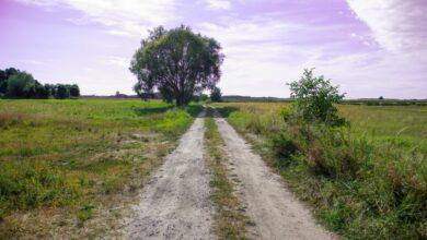 Photo of Lepsze drogi dla rolników